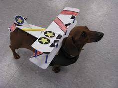Halloween Costumes Dachshunds Dachshund Halloween Costumes U0026 Contest Results Crusoe U0027s