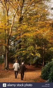 walkers in autumnal woods rhinefield ornamental drive near stock