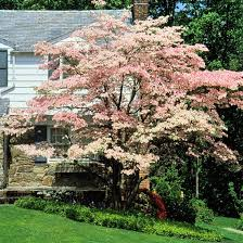 best flowering trees and shrubs leaves flowering trees and shrub