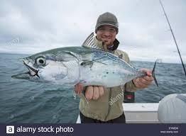fisherman holding false albacor cape cod massachusetts united