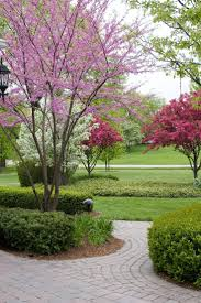 tree ideas for backyard best 25 flowering crabapple tree ideas only on pinterest small