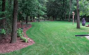 controlling weeds near trees tree services