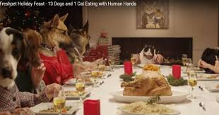 dogs at dinner table holiday feast with 13 dogs and 1 cat at the dinner table too funny