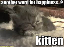 Happy Kitten Meme - cute yet funny