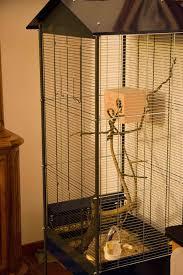 gabbie scoiattoli consigli letargo tamia