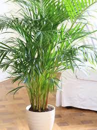 plants low light best 25 low light houseplants ideas on pinterest indoor plants great