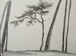 drawn pine tree pencil drawing pencil and in color drawn pine