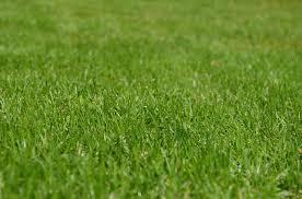 2017 best lawn fertilizers reviews top lawn fertilizers