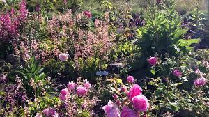 Berkeley Botanical Gardens Garden Of Roses Uc Botanical Garden At Berkeley