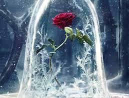 where to buy a u0027beauty u0026 the beast u0027 enchanted rose for all