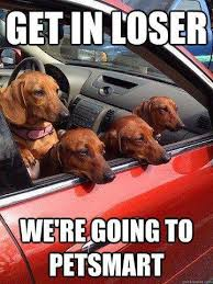 Wiener Dog Meme - dachshund memes and wiener dog humor the smoothe store