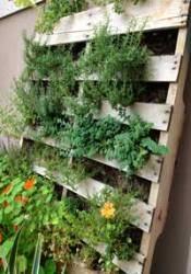 Vegetable Container Garden - container vegetable gardening vegetablegardeninglife com