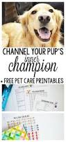 channel your pup u0027s inner champion in 4 easy steps free pet care