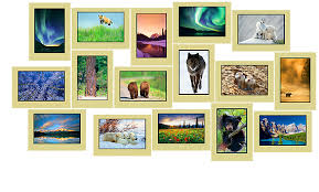 wilderness moments wildlife and nature greeting cards by e