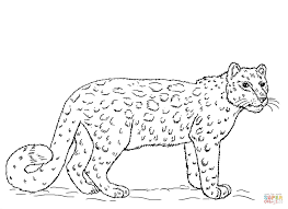leopard coloring page free download