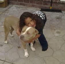 woodhaven lexus winnipeg manitoba dogs bite decatur al union city ca a family u0027s pit bull type dog