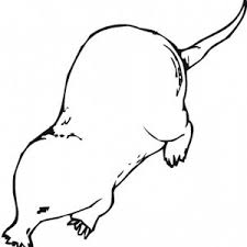 wild mole coloring pages batch coloring