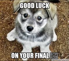 Good Luck Cat Meme - unique good luck cat meme the gallery for good luck puppy meme