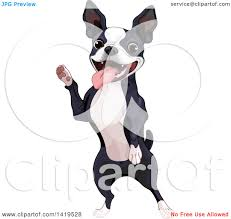 clipart of a cute boston terrier dog standing on his hind legs