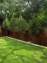 trees for modern landscape home design architecture cilif