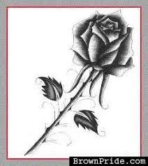 sketched rose brownpride com photo gallery bp
