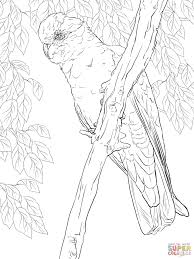 rose breasted cockatoo or galah coloring page free printable
