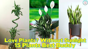 best indoor plants for low light office plants low light awesome plant 9 best indoor plants for low