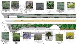 drought tolerant native plants expo line phase 2