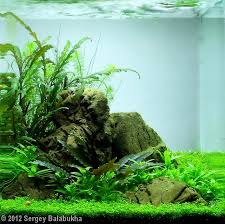 Aquascape Aquarium Plants 2012 Aga Aquascaping Contest 211