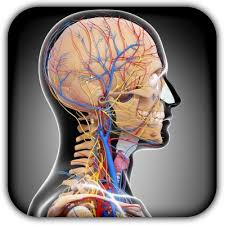 Anatomy And Physiology Apps Apps For Anatomy Choice Image Learn Human Anatomy Image