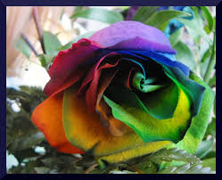 different color roses of a different color ii by xxinfinitedreamsxx on deviantart