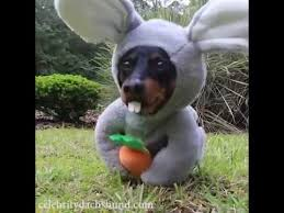 Weiner Dog Meme - easter bunny wiener dog youtube