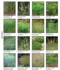 grasses allium yarrow planting combinations gardening