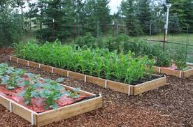 Pvc Raised Garden Bed - the best designing a basic pvc home garden drip irrigation system