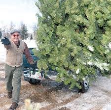 christmas tree recycling available at santa rita park