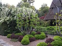 25 beautiful plum garden ideas on flowering plum tree