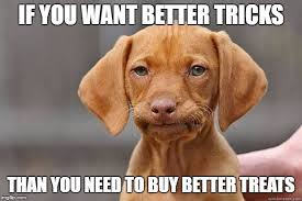 Puppy Memes - disappointed puppy memes imgflip