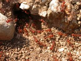 africa travel blogger facts about ants