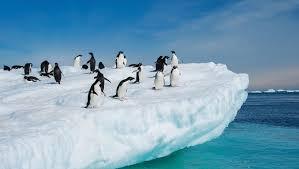 imagenes de la antartida qué pasaría si la antártida se deshelara nuestroclima