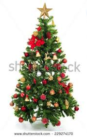 tree isolated stock images royalty free images