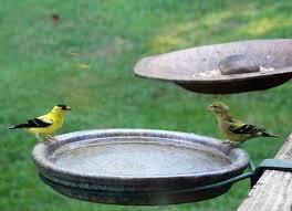 clamp on deck bracket for bird baths u0026 feeders u2013 the birdhouse