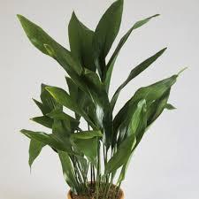 good houseplants for low light 10 best houseplants for low light sunset magazine