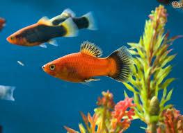 100 types of aquarium fish fishtank fishes with names names