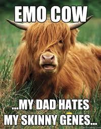 Genes And Memes - emo cow my dad hates my skinny genes emo cow quickmeme