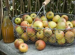 cuisiner la pomme recettes à base de pommes selon les variétés