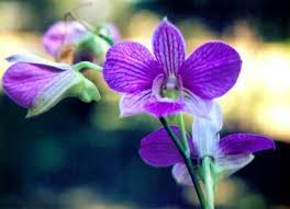 orchid pictures how to care for orchids with pictures wikihow