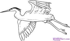 draw heron step step birds animals free