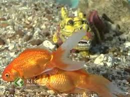 aquarium of ornamental fishes part 1