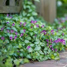 Best Plants For Rock Gardens 330 Best Rock Gardens Images On Pinterest Gardening Sloped