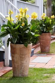 Flowering Patio Plants Best 25 Tall Outdoor Planters Ideas On Pinterest Flower